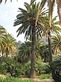 Palmtree struck by shells (Maria Serena).jpg