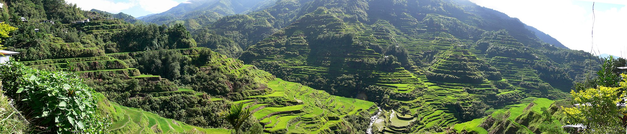 Ifugao/Igorot utilized terrace farming to grow crops in the steep mountainous regions of northern Philippines. - Philippines
