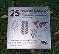 Pankrác, Centrální park, pajasan žláznatý, tabulka.jpg