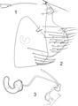 Parasite 20, 35 (2013) Figures 1-3.tif