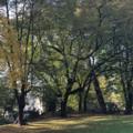 Parco Parolini Bassano del Grappa - Dalla collezione ENTER.png