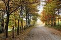 Passeggiando in autunno.JPG
