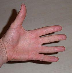 Paume de main.jpeg