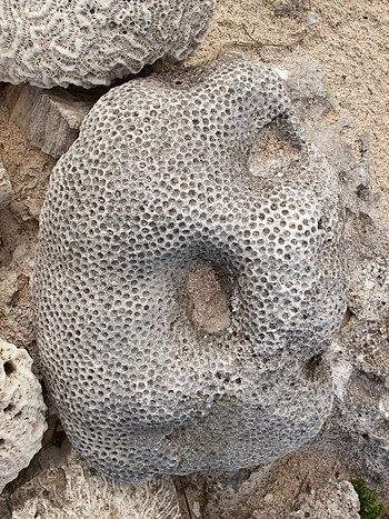 Pedras estra%C3%B1as. Praia do Hotel Bah%C3%ADa Pr%C3%ADncipe%2C Quintana Roo%2C M%C3%A9xico 6