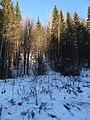 Permskiy r-n, Permskiy kray, Russia - panoramio (1180).jpg