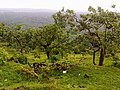 Peruvanmala (Perumala), Kechery Kerala - panoramio.jpg