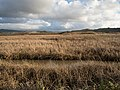 Pescadero Marsh (91813).jpg