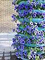 Petunia flower pile - panoramio.jpg