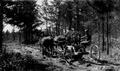 Photograph of Road Crew of Forest Service - NARA - 2127423.tif