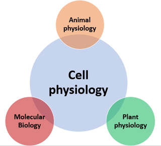 Cell physiology study of cell activity