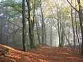 Pieterpad near Doetinchem.JPG