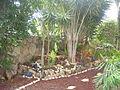 PikiWiki Israel 30139 Plants of Israel.JPG