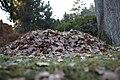 Pile of leaves 001.jpg