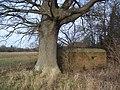 Pillbox and tree near Penshurst - geograph.org.uk - 1691051.jpg