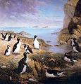 Pinguinus.jpg
