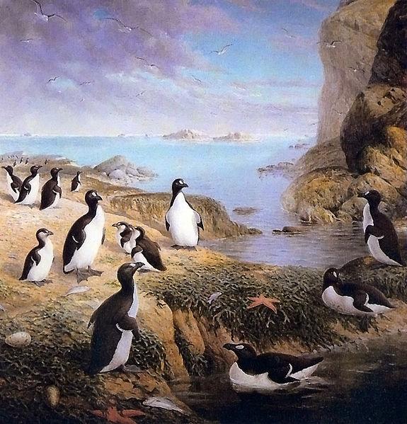 File:Pinguinus.jpg
