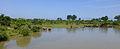 Plan d'eau-Uda Walawe National Park.jpg