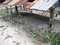 Pol Pot's Cremation Place - panoramio.jpg