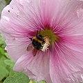 Pollen Orgy (164457827).jpeg