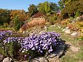 Poltava Botanical garden (57).jpg