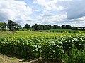 Pope Farm Conservancy - panoramio - Corey Coyle (10).jpg