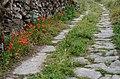 Poppy path (9035618686).jpg