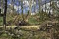 Promenade dans une nature dense (25791281033).jpg
