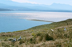 Protection Island (Washington) - Image: Protection Island National Wildlife Refuge