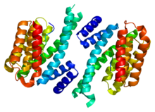 Protein SFN PDB 1ywt.png