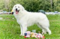 Pyrenean Mountain Dog Kennel Romtat Farm.jpg