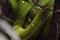 Python Vert.jpg