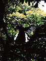 Quetzal-001.jpg