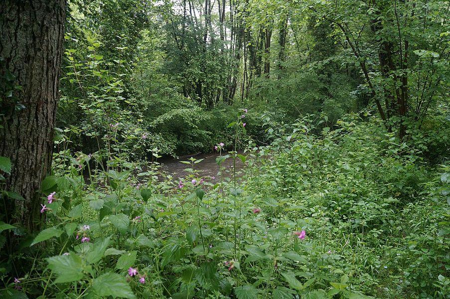 L'Hogneau dans la Vallée du Marbre.-  La réserve naturelle régionale du bois d'Encade entre Gussignies  et Bellignies.- Nord.- France.
