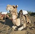 Rajasthan (6363963441).jpg