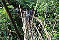 Rangthylliang new bridge.jpg