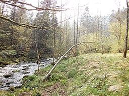 Der Fluss Eyach