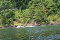 Raystown lake August 2016 - panoramio - Ron Shawley (192).jpg