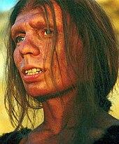 Neandertaler Wikipedia