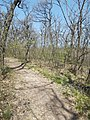 Red square hiking trail close to Frank Hill. - Csillebérc, Budapest.JPG