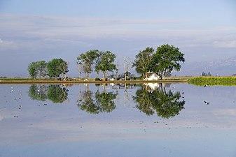 Reflejos en el Delta del Ebro.jpg