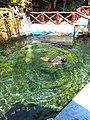 Relaxing nature pool.jpg