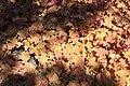 Rhododendronpark Bremen 20090513 164.JPG