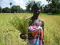 Rice Farmer with Rhamphicarpa.jpg