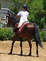 Riding a Horse Backwards 1110779.jpg