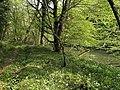 River Tamar - geograph.org.uk - 793765.jpg
