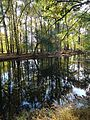 River with reflections of trees autumn in Cranford New Jersey.JPG