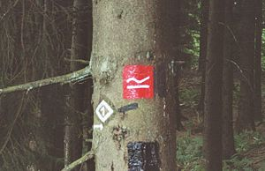 "Rothaarsteig - Signpost for the Rothaarsteig: a white ""R"" on its side on a red background"