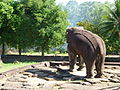 Roulos Group - 011 Bakong Elephant (8588903504).jpg