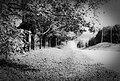 Rural road in Caledon, Ontario in 1987.jpg