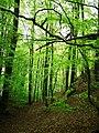 Söderåsen landscape mysterious forest.jpg